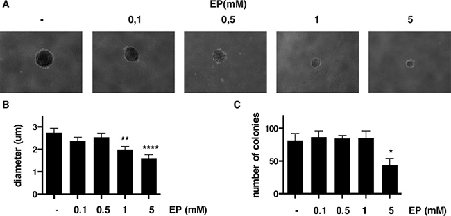 EP reduces colony formation of HP3 in soft agar.