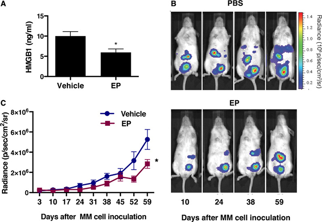 EP decreases serum levels of HMGB1 with concurrent reduction of the tumor growth.