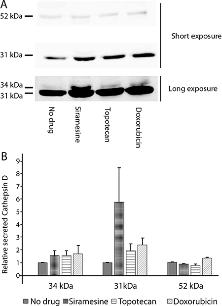 Drug-induced lysosomal exocytosis results in the release of cathepsin D into the medium.