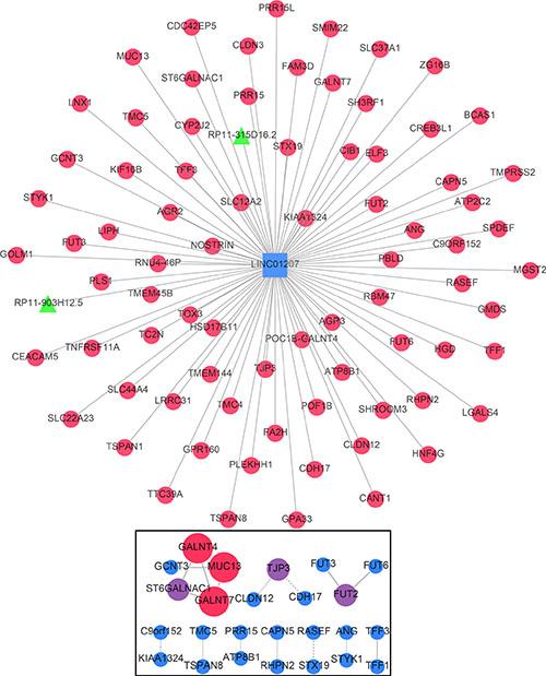 Gene network of the correlative genes of LINC01207.