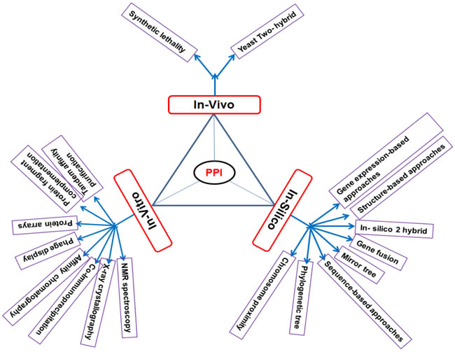 Different types of PPI network detection methods.