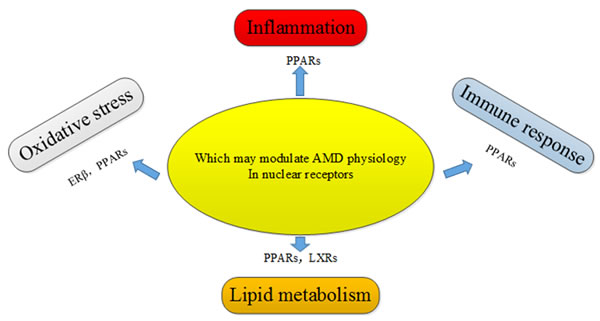 Potential nuclear receptors that may regulate AMD pathogenic pathways through their involvement in oxidative stress, inflammation, immune response, and lipid metabolism.