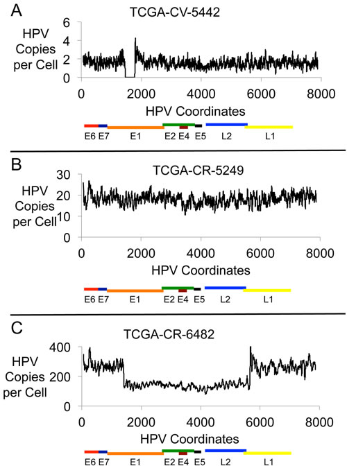 HPV16 Genomic DNA Profiles.