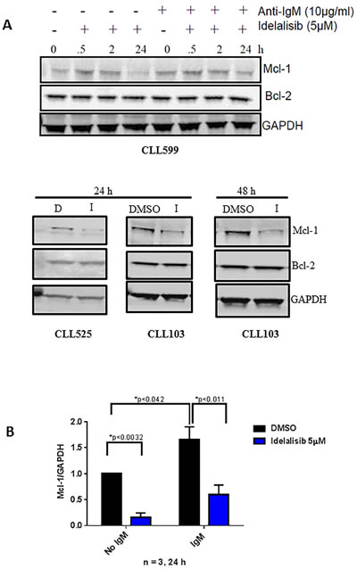 Effect of idelalisib on Mcl-1 protein levels.