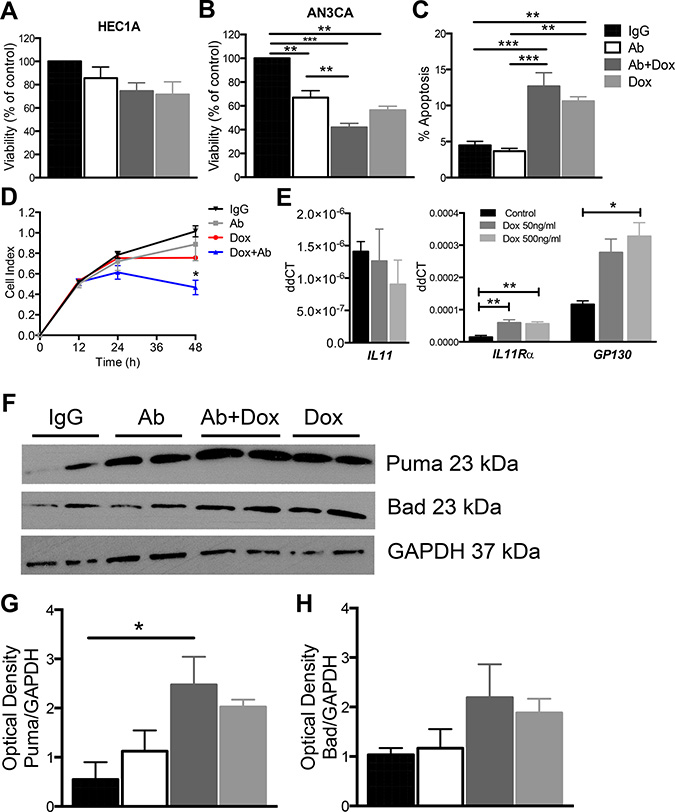 The effect of anti-human IL11Rα antibody combination treatment with doxorubicin on AN3CA cell viability, proliferation and apoptosis in vitro.