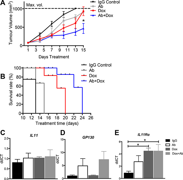 The effect of anti-human IL11Rα antibody combination treatment with doxorubicin on AN3CA xenograft tumour growth in vivo.