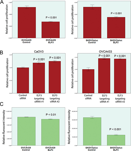 Functional studies of ELF3 expression in ovarian cancer cell lines.