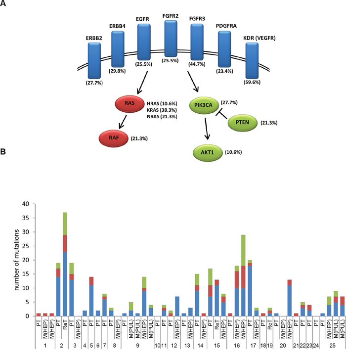 Mutations in receptor tyrosine kinases, RAS/MAPK and PI3K/AKT pathways in EGFR-treated CRC cases.