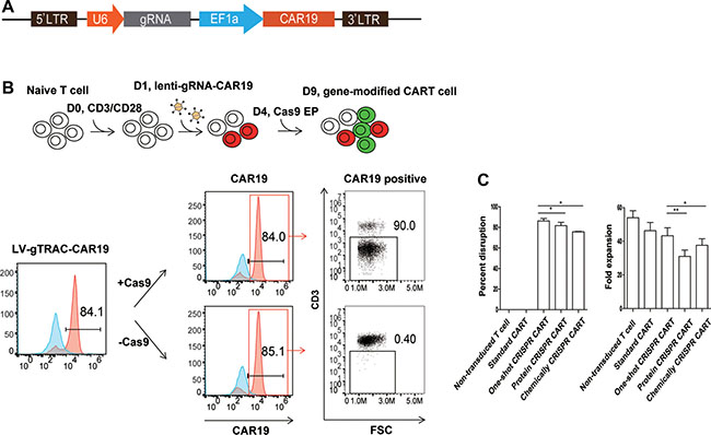 Efficient TCR disruption in T cells with the one-shot CRISPR system.