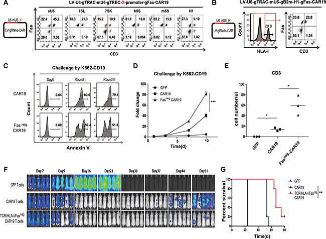 Triple gene ablation with the one-shot CRISPR system to generate universal CAR T cells resistant to apoptosis.