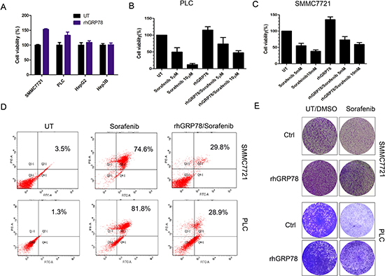 Secreted GRP78 promoted the proliferation of HCC cells and inhibited the sensitivity of HCC cells to sorafenib in vitro.
