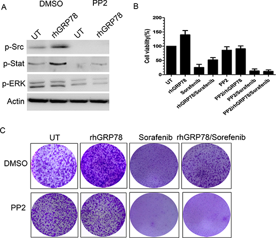 Inhibition of SRC activity attenuates the resistance to sorafenib induced by secreted GRP78.