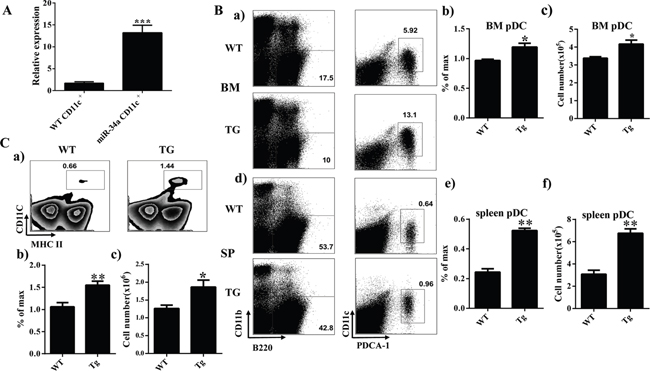 Overexpression of miR-34a increases number of cDC and pDC in miR-34a transgenic mice.