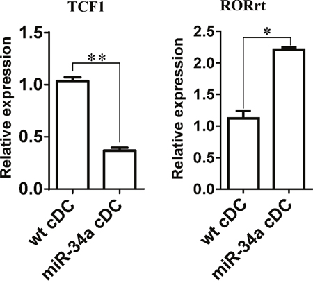Expression of TCF1 and RORrt in miR-34a overexpressed DCs.