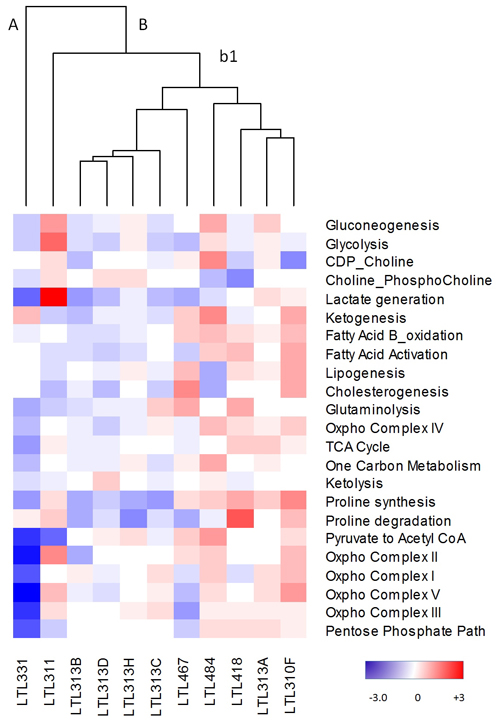 Metabolic heterogeneity in the PDX model.