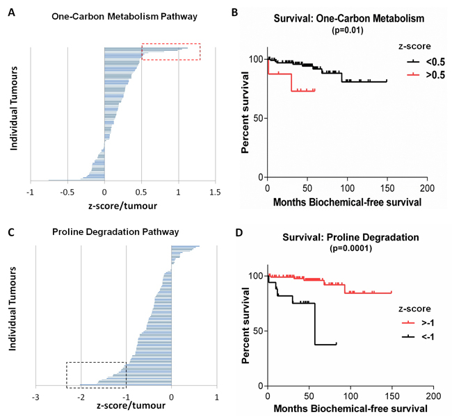 Metabolic pathways within the MSKCC Cohort associated with significantly decreased survival.