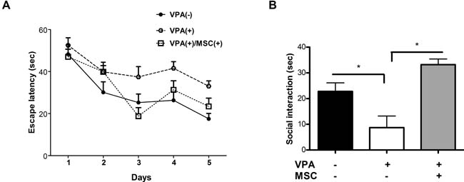 Mesenchymal stem cells transplantation can restore cognitive and social behaviour in VPA-treated mice.