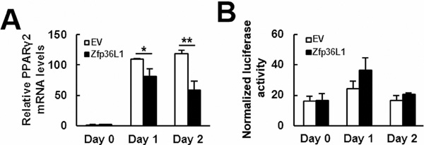 ZFP36L1 decreased PPARγ2 expression but not Pparγ promoter activity.