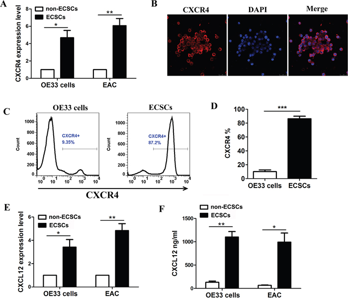 High expression of CXCR4 and autocrine secretion of CXCL12 by esophageal cancer stem cells.