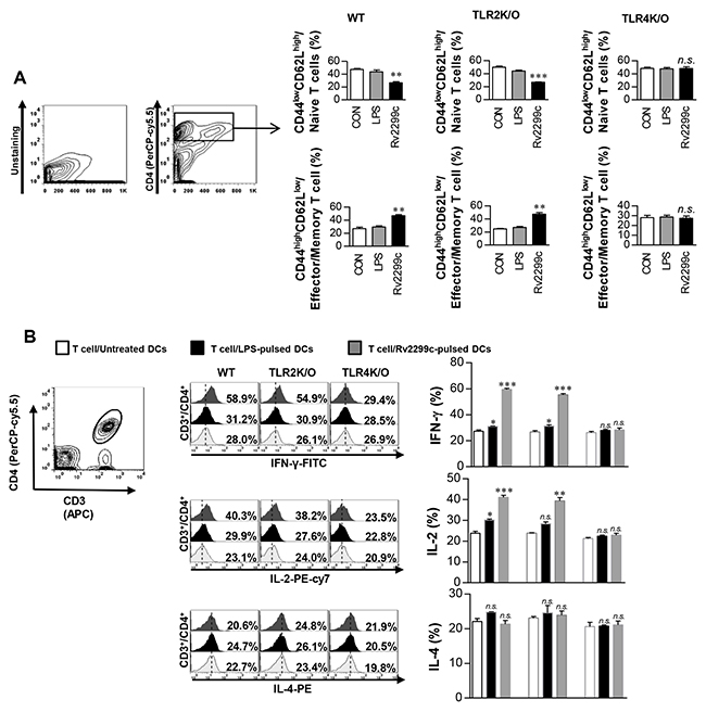 Rv2299c protein-treated DCs induce expansion of effector/memory T-cell population.