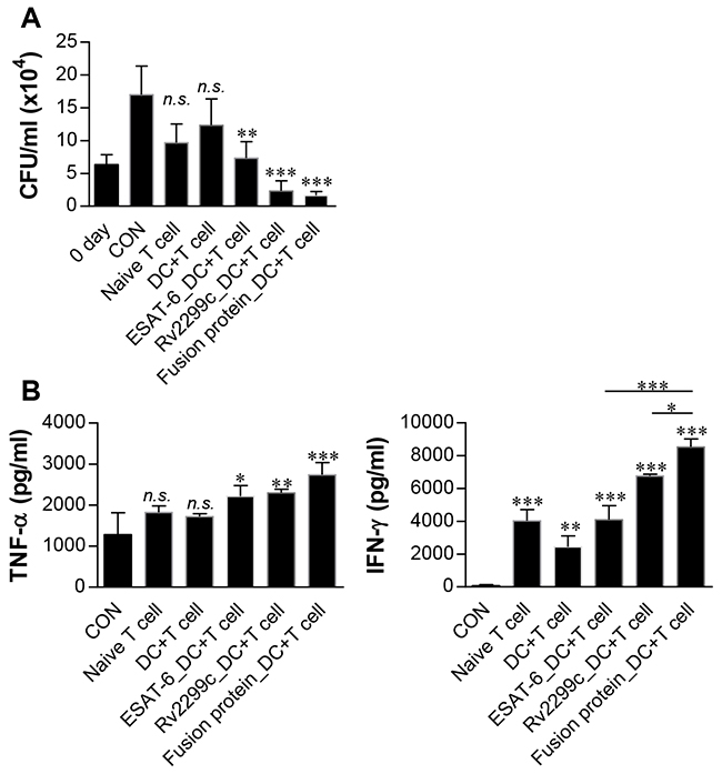 Inhibition of intracellular Mtb growth by T cells activated with Rv2299c-ESAT-6 fusion protein-maturated DCs.