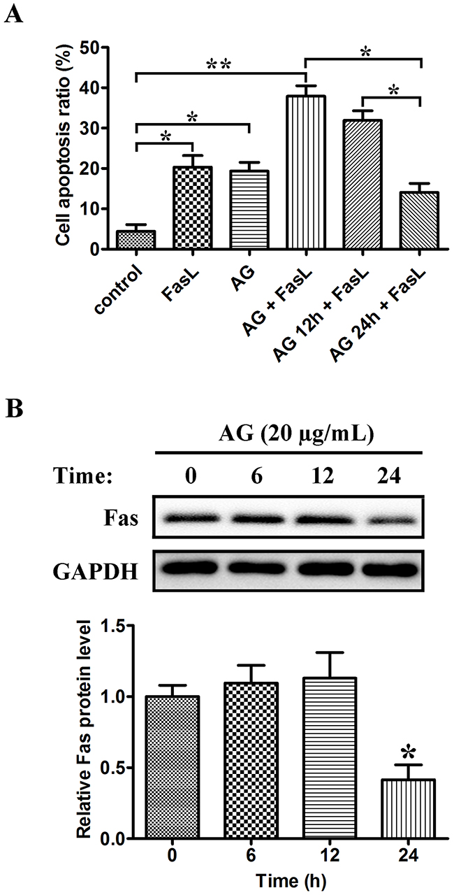 Dual effects of AG on Fas/FasL-induced apoptosis in A549 cells.