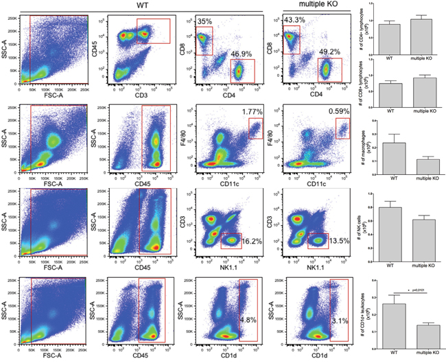 Decreased numbers of CD1d-expressing lung cells in multiple KO mice.