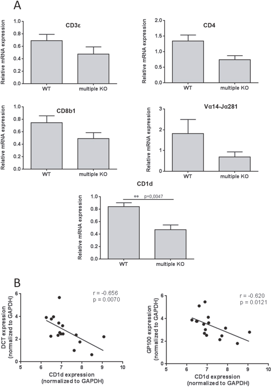 Decreased expression of CD1d in multiple KO mice.