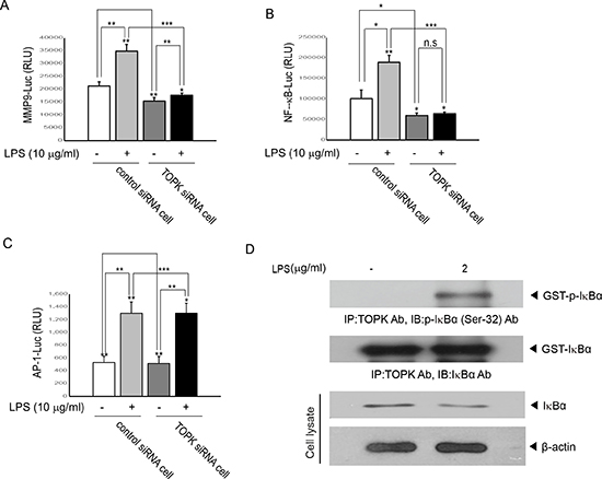 TOPK is essential for LPS-induced transcriptional activity driven by NF-kB- or MMP9- but not AP-1-promoter, and is activated by LPS.