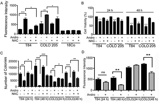 Andrographolide induces ROS generation in colon cancer cells.
