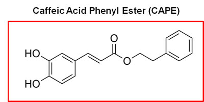 Chemical structure of caffeic acid phenyl ester (CAPE), a key component of honey-bee propolis.