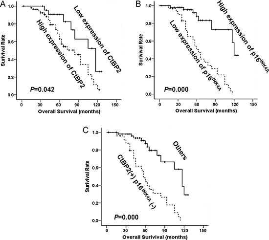 The relationship between CtBP2, p16INK4A and patient survival.