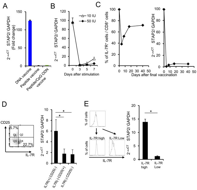 STAP2 regulates vaccine-induced memory CD8