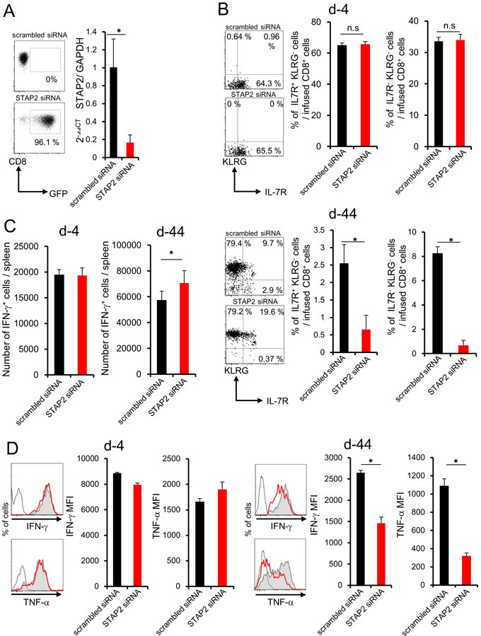 STAP2 has a crucial role in memory generation but not in effector cell differentiation in the spleen.