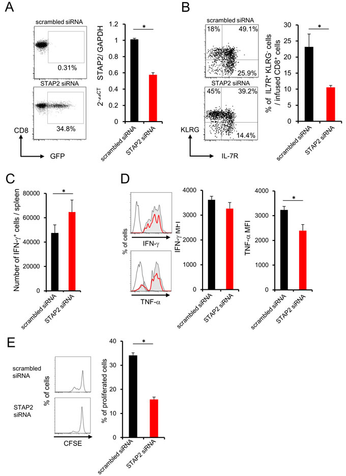 Importance of STAP2 on the elicitation of functional CD8