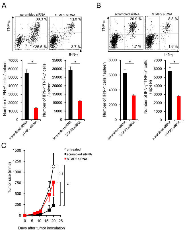 STAP2-mediated augmentation of secondary memory CD8