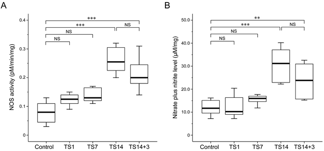 Effects of simulated weightlessness by tail suspension (TS) on nitric oxide synthase (NOS) activity and nitric oxide (NO) production.