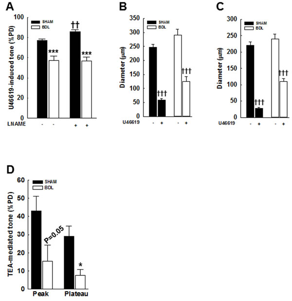 Effect of an agonist and TEA on vascular tone in pressurized mesenteric arteries from SHAM- and BDL-rats.