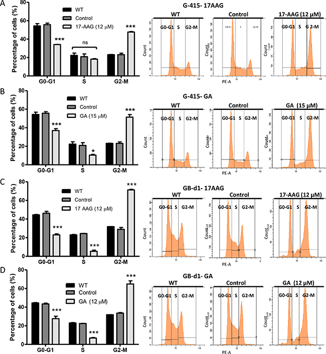 Effect of 17-AAG and GA on cell cycle on human GBC cells.