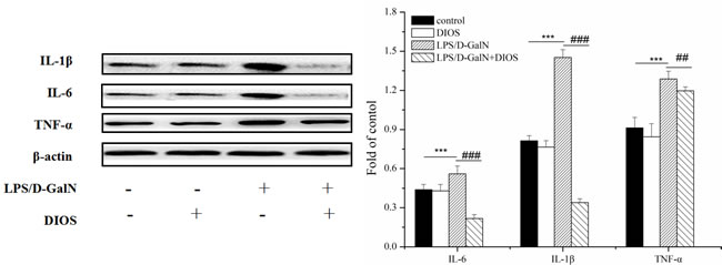 Effect of DIOS on the expressions of IL-1β, IL-6, and TNF-α after LPS/D-GalN administration.