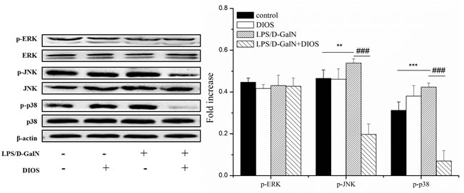Effect of DIOS on the MARK signaling pathway after administration of LPS/D-GalN endotoxin.