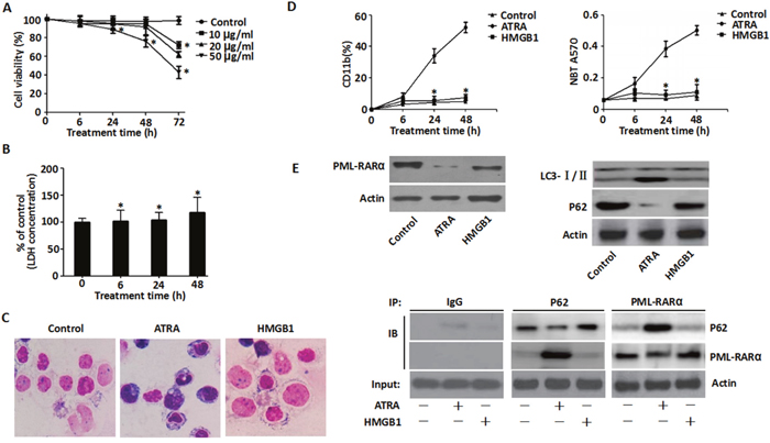 Effects of exogenous HMGB1 on ATRA-induced differentiation.