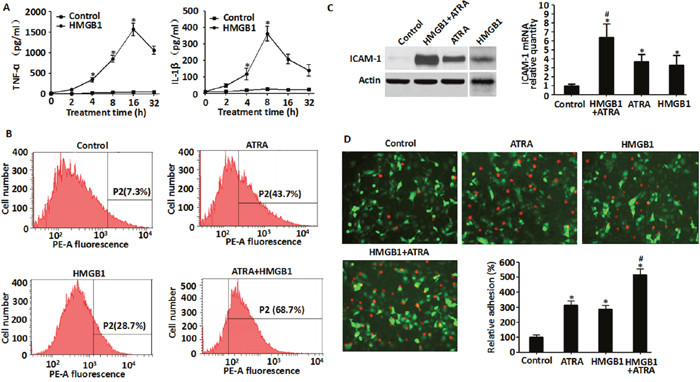 Exogenous HMGB1 induced cytokine secretion, up-regulated expression of ICAM-1 and enhanced endothelial adhesion in NB4 cells.