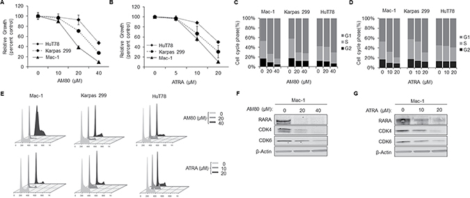 Retinoids cause G1-arrest and concurrent inhibition of RARA and CDK4/6 expression.