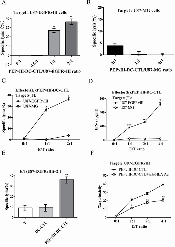 PEPvIII-DC-CTLs efficiently killed U87-EGFRvIII cells.