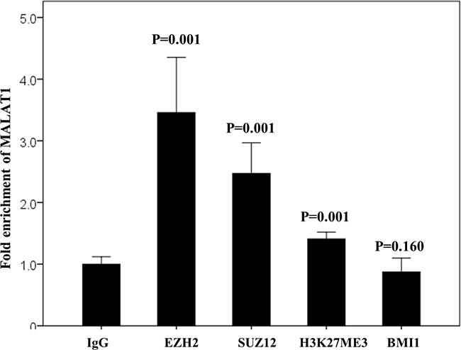 RNA immunoprecipitation assay in the non-treated HH cell line.