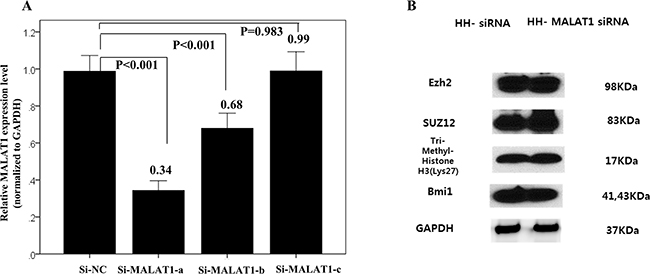 Changes of interaction with PRC-related markers according to MALAT1 inhibition.