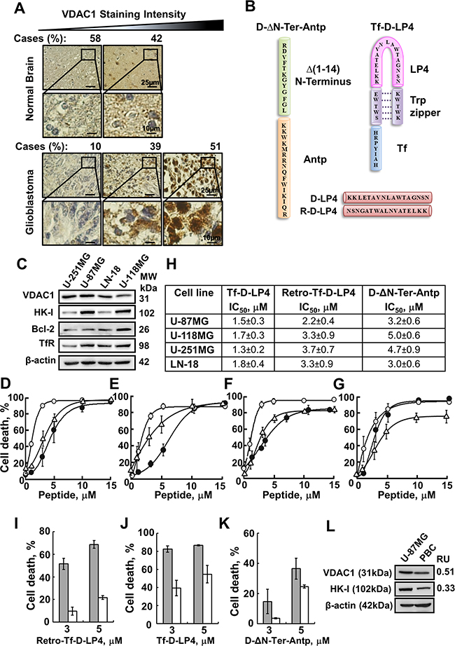 VDAC1-based peptides induce dramatic cell death of several brain tumor-derived cell lines but to lesser extent in primary brain cells.