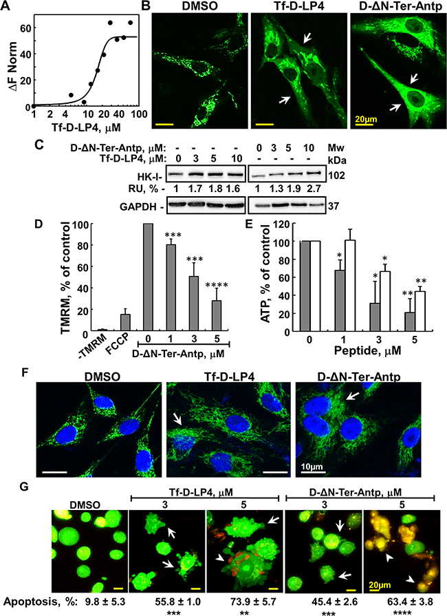 Mode of action of VDAC1-based peptides – interacting with- and detaching HK, releasing Cyto c, decreasing ATP level and inducing apoptosis.