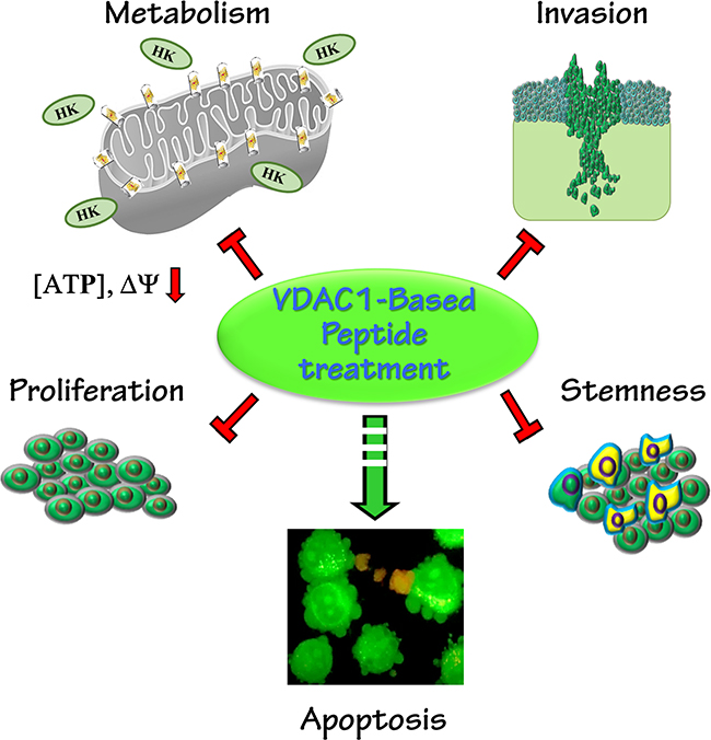 A schematic presentation of a VDAC1-based peptide inducing reversal of a tumor's oncogenic properties.